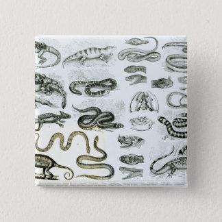 ハ虫類、蛇およびトカゲ 缶バッジ