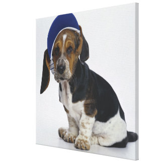バイザーを持つバセットハウンドの子犬 キャンバスプリント