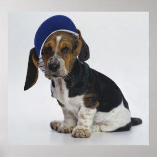 バイザーを持つバセットハウンドの子犬 ポスター