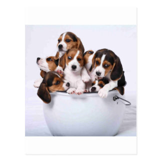 バケツのビーグル犬 ポストカード