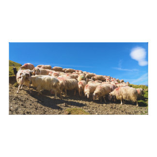 バスクBéarnaiseかバスクのヒツジの群れ キャンバスプリント