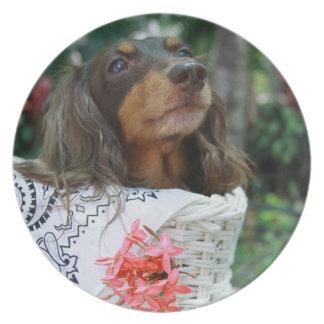 バスケットに坐っているダックスフント犬のクローズアップ プレート
