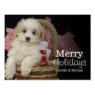 バスケットに坐っているCristmas Malti-pooの子犬 ポストカード