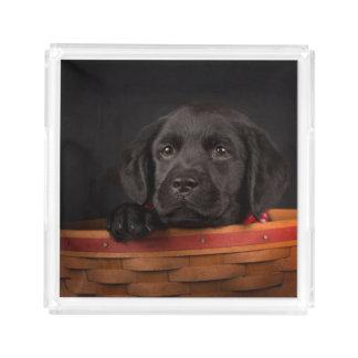 バスケットの黒いラブラドル・レトリーバー犬の子犬 アクリルトレー