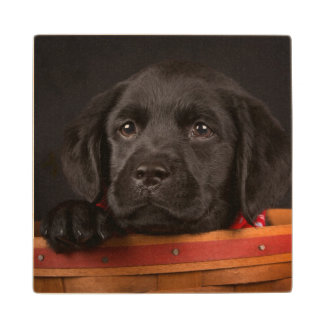 バスケットの黒いラブラドル・レトリーバー犬の子犬 ウッドコースター