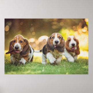 バセットハウンドの子犬の走ること ポスター