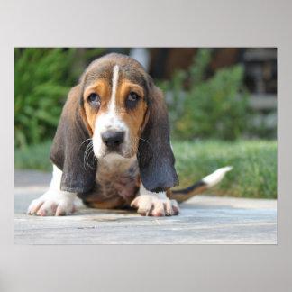 バセットハウンドの子犬 ポスター