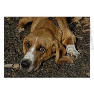バセットハウンドの救助犬Mable カード