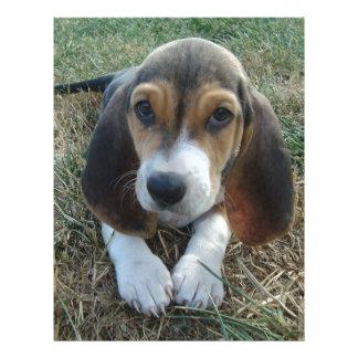 バセット犬のArtésien Normandの小犬 レターヘッド