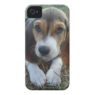 バセット犬のArtésien Normandの小犬 Case-Mate iPhone 4 ケース