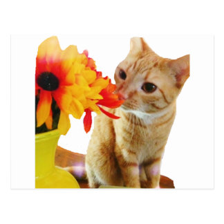 """""""バターこんにちは""""はかわいい猫の郵便はがきを言います ポストカード"""