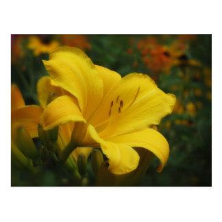バター付きのポップコーンの庭-ワスレグサ ポストカード