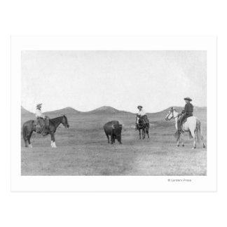 バッファローの写真をロープをかけている馬のカウボーイ 葉書き