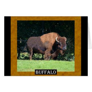 バッファロー(カンザス、オクラホマ、ワイオミング) カード