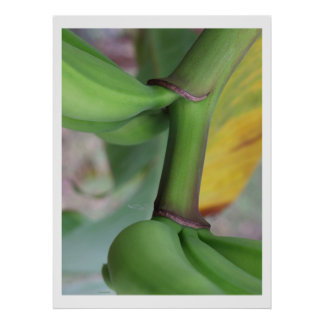 バナナの美しい ポスター