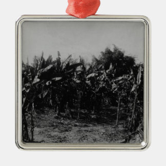 バナナの耕作、トリニダード、c.1891 メタルオーナメント