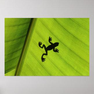 バナナの葉を通したカエルのシルエット ポスター