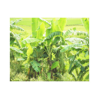 バナナの葉 キャンバスプリント