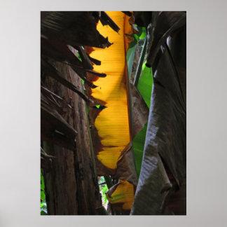 バナナの葉 ポスター