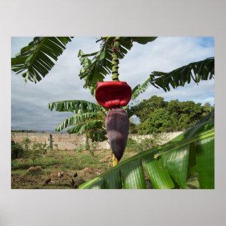 バナナの開花 ポスター