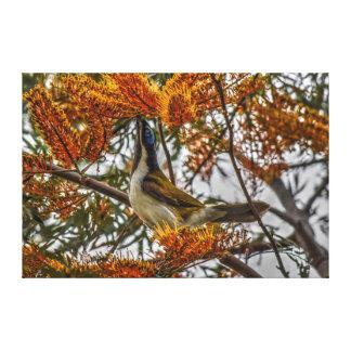 バナナの鳥田園クイーンズランドオーストラリア キャンバスプリント