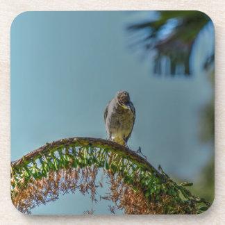 バナナの鳥田園クイーンズランドオーストラリア コースター