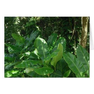 バナナ植物 カード