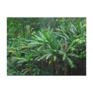 バナナ植物 キャンバスプリント