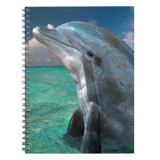 バハマのイルカ ノートブック