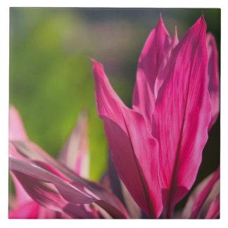 バハマのプロヴィデンスの新しい島、ナッサウ: 楽園 タイル