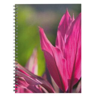 バハマのプロヴィデンスの新しい島、ナッサウ: 楽園 ノートブック
