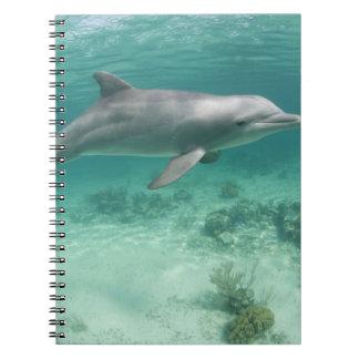 バハマの壮大なBahama島、フリーポート、捕虜6 ノートブック