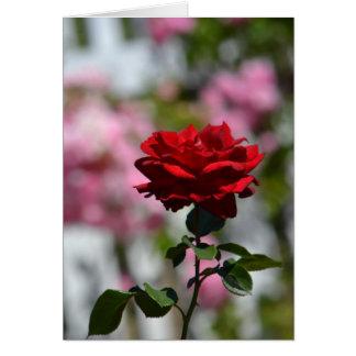 バラのロマンチックな庭 カード