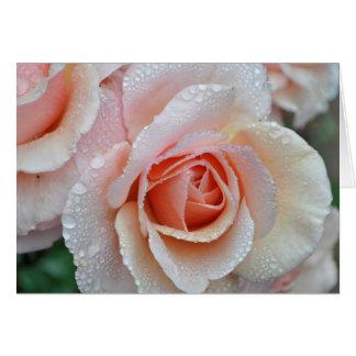バラの雨滴 カード