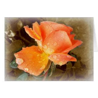 バラの雨滴..... カード