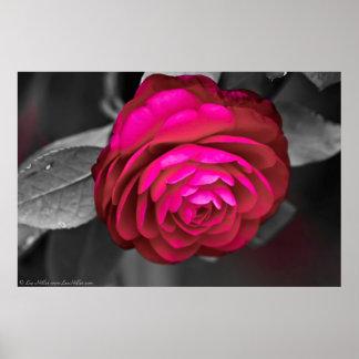 バラ色のツバキ ポスター