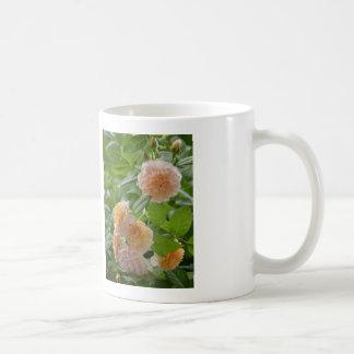 バラ グレース Rose  Grace コーヒーマグカップ