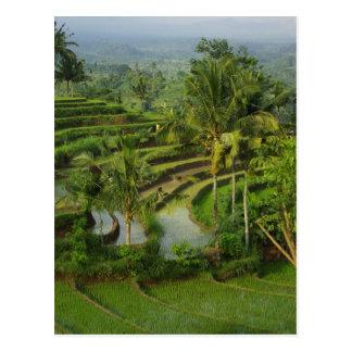 バリ島の台地Ricefield ポストカード