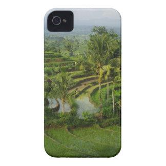 バリ島の台地Ricefield Case-Mate iPhone 4 ケース