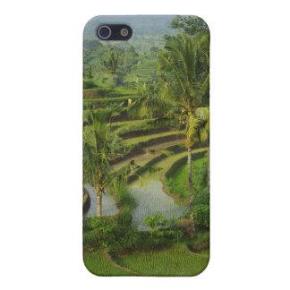 バリ島の台地Ricefield iPhone 5 Cover