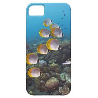バリ島、インドネシア iPhone SE/5/5s ケース