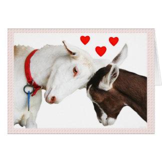 バレンタインのヤギのカップル カード