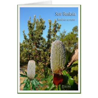 バンクシア-バンクシアのserrata --を見ました カード