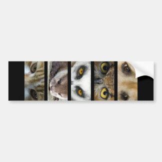 バンパーステッカー-動物の目 バンパーステッカー