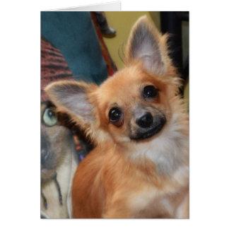 バースデー・カード|のチワワの子犬のキーのキーディラン カード