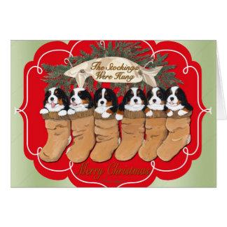 バーニーズ・マウンテン・ドッグのクリスマスカード カード