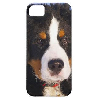 バーニーズ・マウンテン・ドッグの子犬のiPhone 5の場合 iPhone SE/5/5s ケース