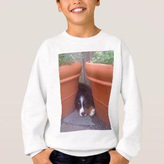 バーニーズ・マウンテン・ドッグの子犬 スウェットシャツ