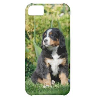 バーニーズ・マウンテン・ドッグの子犬 iPhone5Cケース