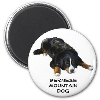 バーニーズ・マウンテン・ドッグの敷物の姿勢の磁石 マグネット